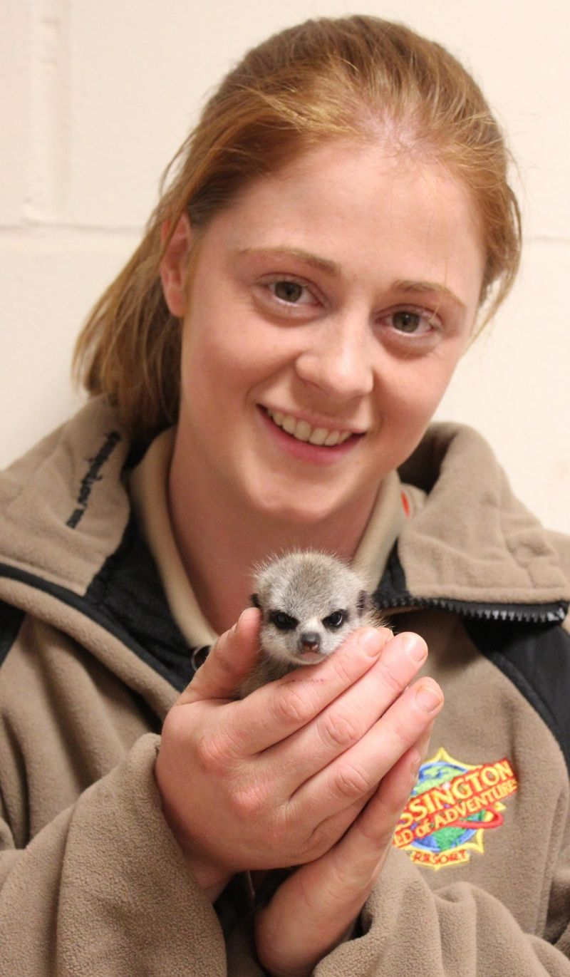 Meerkat and Gemma