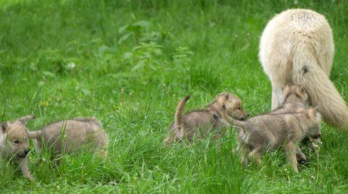 Pups trail mom