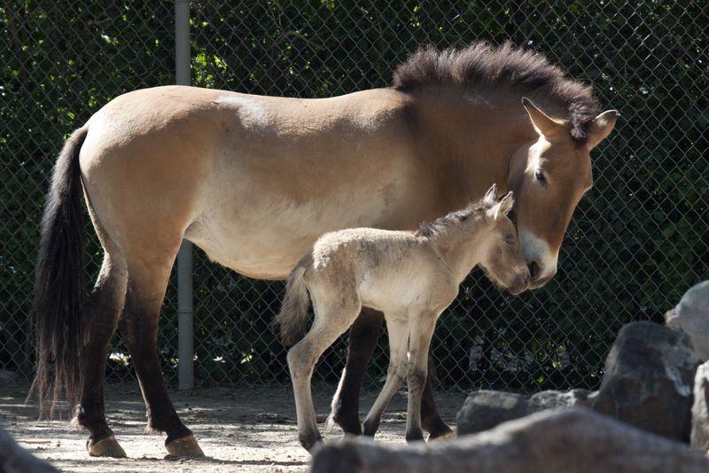 Foal side