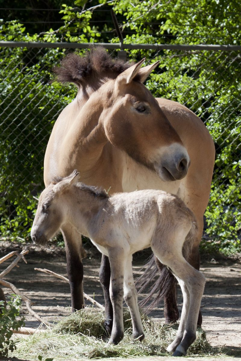 Foal and mom 2
