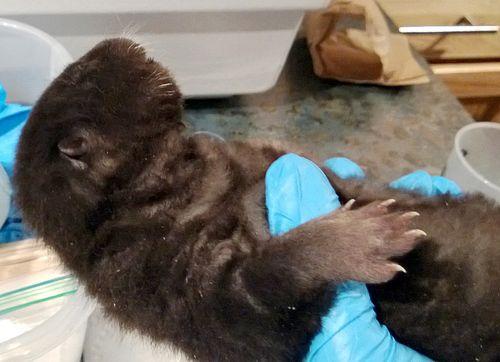 Otter Miles 3