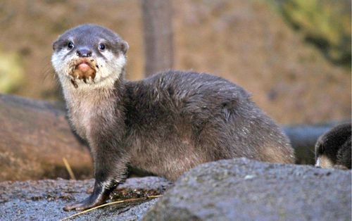 Otter mouth 2