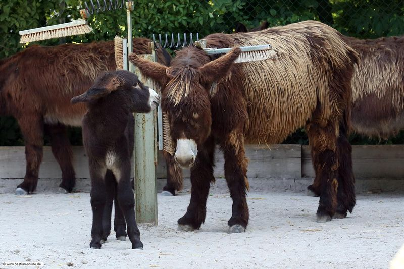 2 donkey