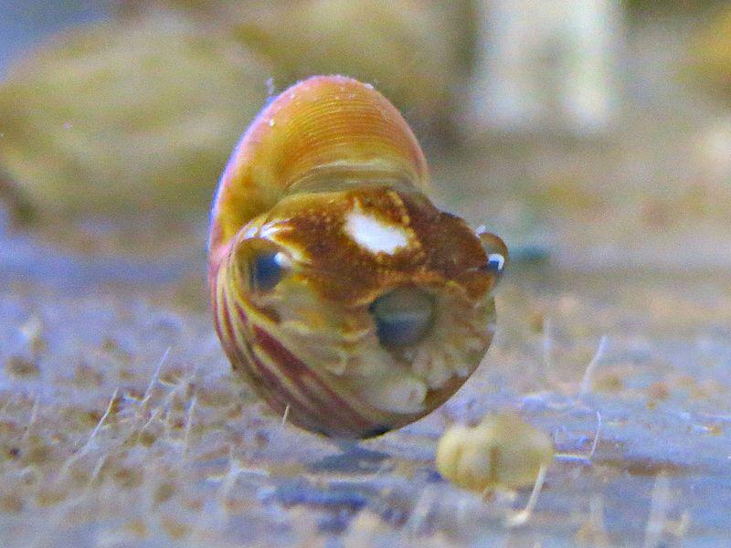 Nautilus Hi Res 6.jpg.jpg