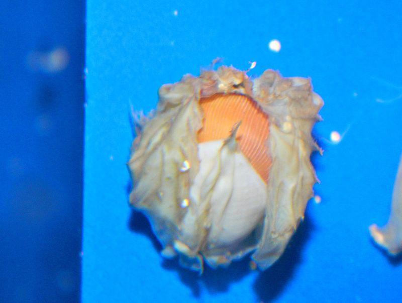 Nautilus Hi Res 2.jpg