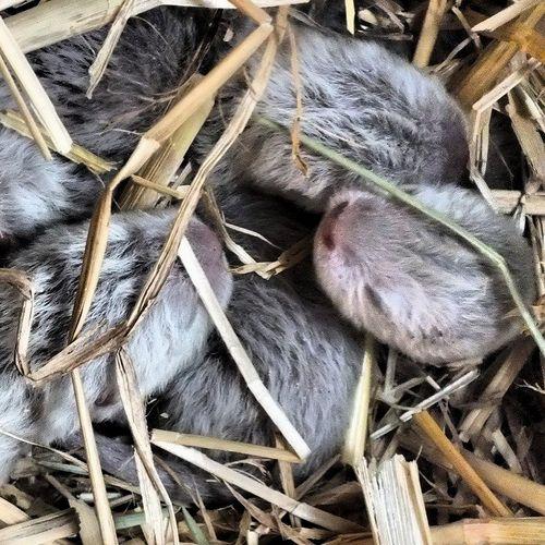Otter emmen pile