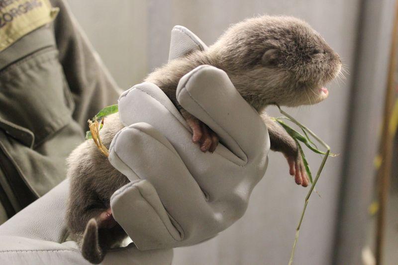Otter vet