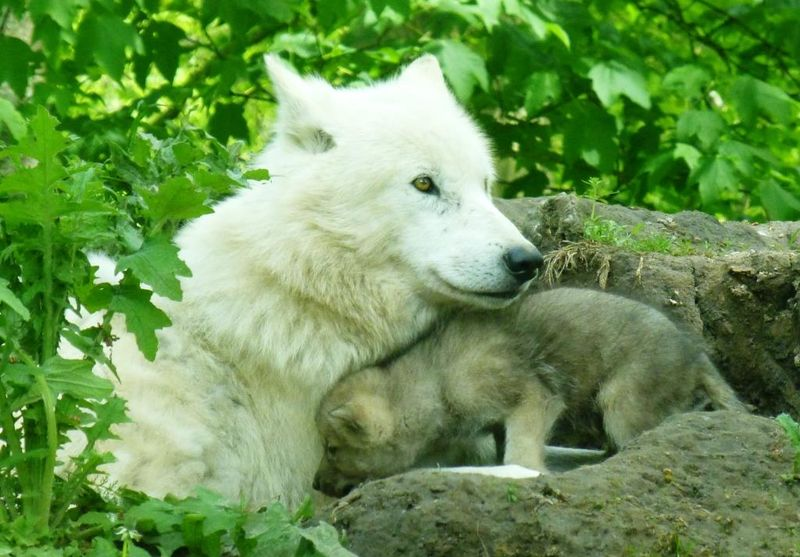 Mom and pup