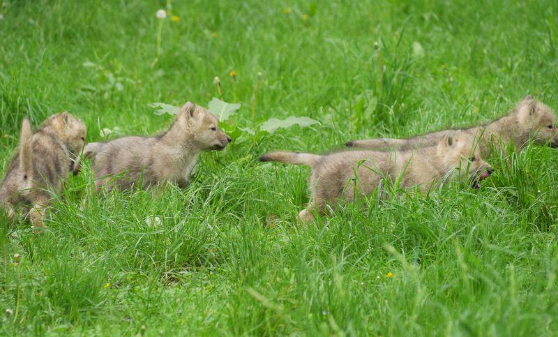 Pup group grass