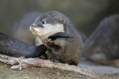 Otter side