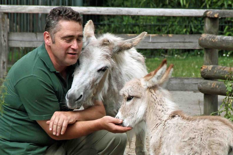 Donkey w keeper