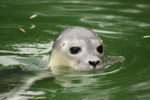 Seal HERO