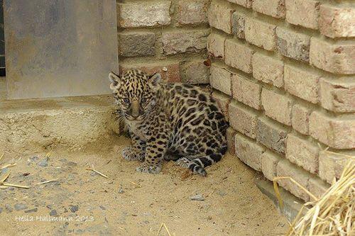 Cub outside