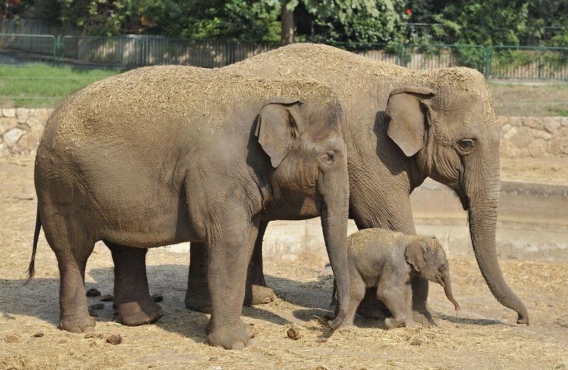 5 elephant