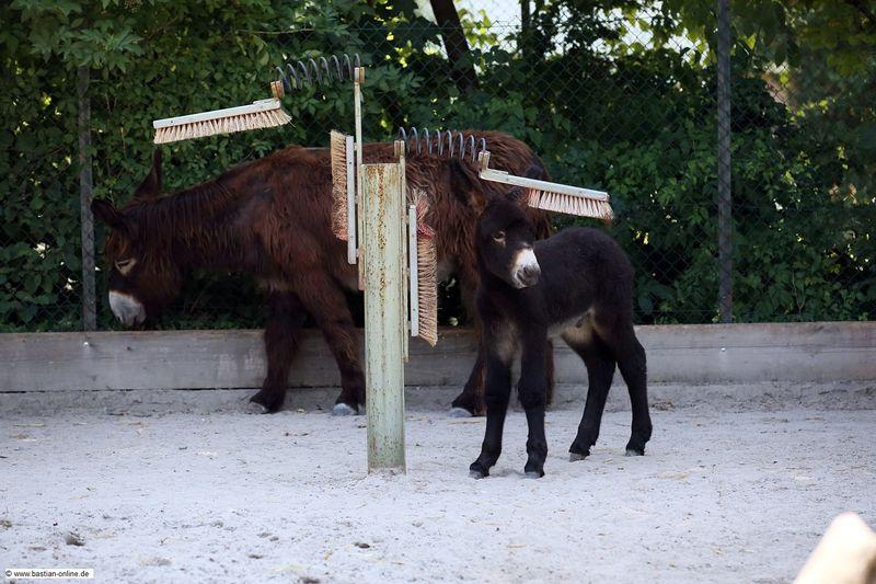 3 donkey