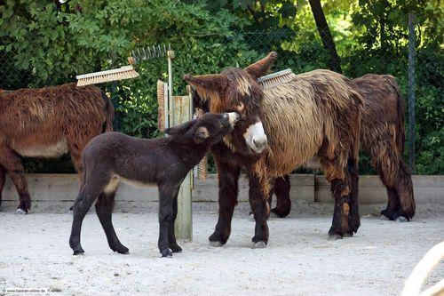 4 donkey