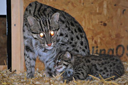 5 fishercat