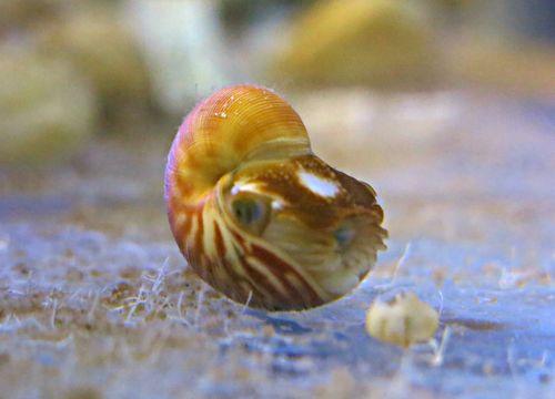 Nautilus Hi Res 7.jpg
