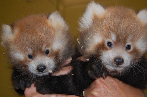 Cubs 4