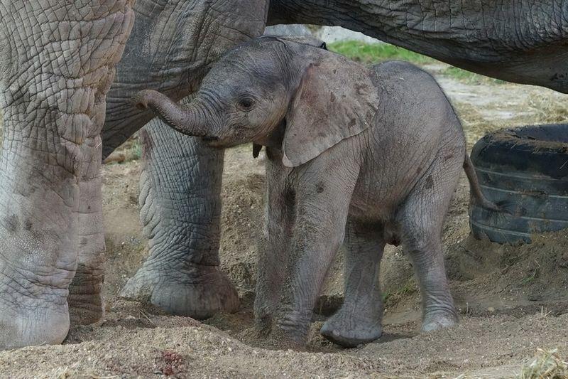 1 elephant