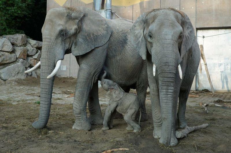 2 elephant