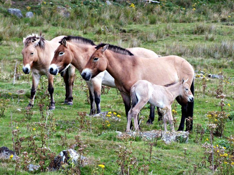 3 horse