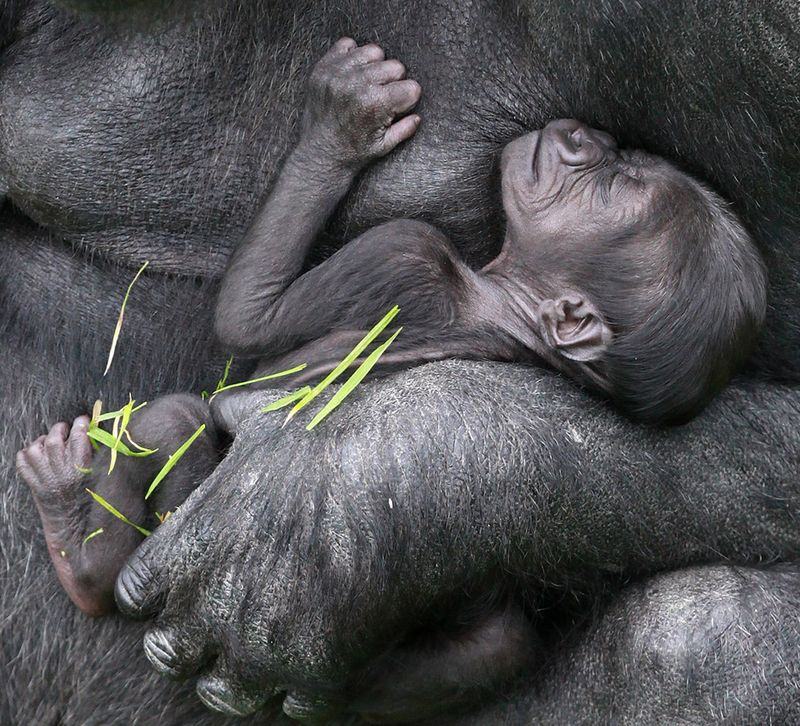 (2)  You can help the zoo name their latest arrival by voting for your favourite name at www.belfastzoo.co.uk
