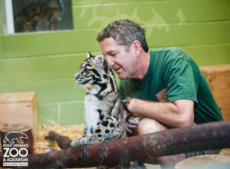 6 leopard
