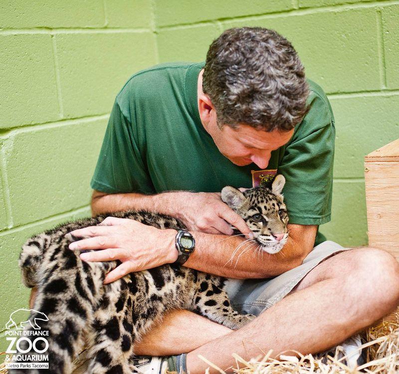 7 leopard