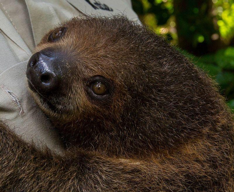 SlothBaby_002_LG2