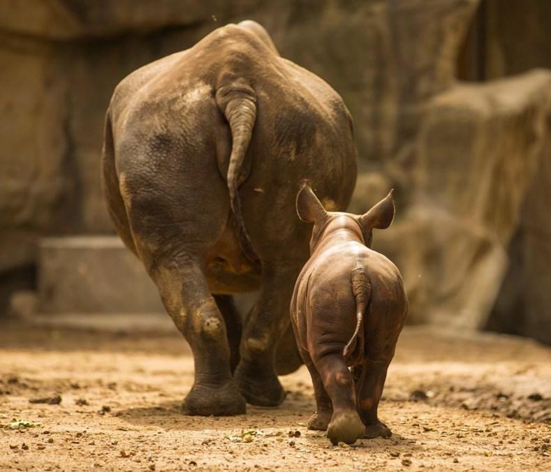 1 rhino