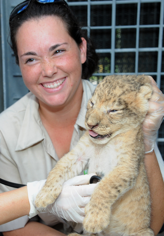 Zoo Miami's First Ever Lion Cubs!