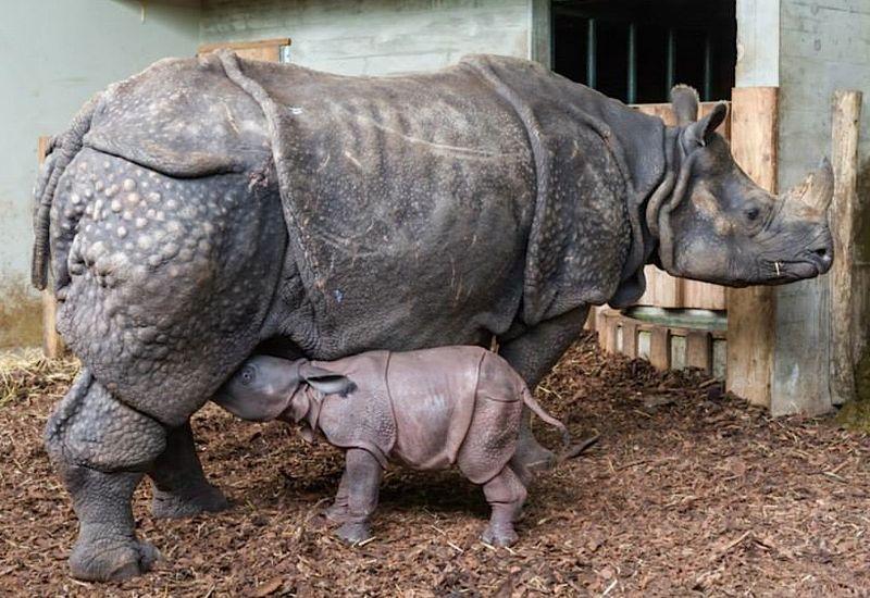 4 rhino