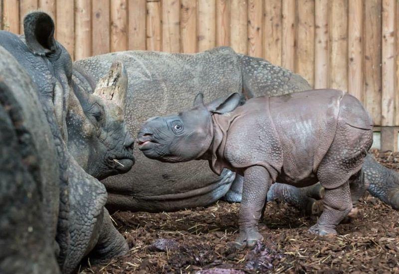 2 rhino