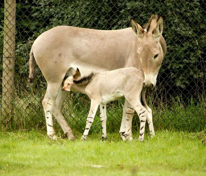 6 foal
