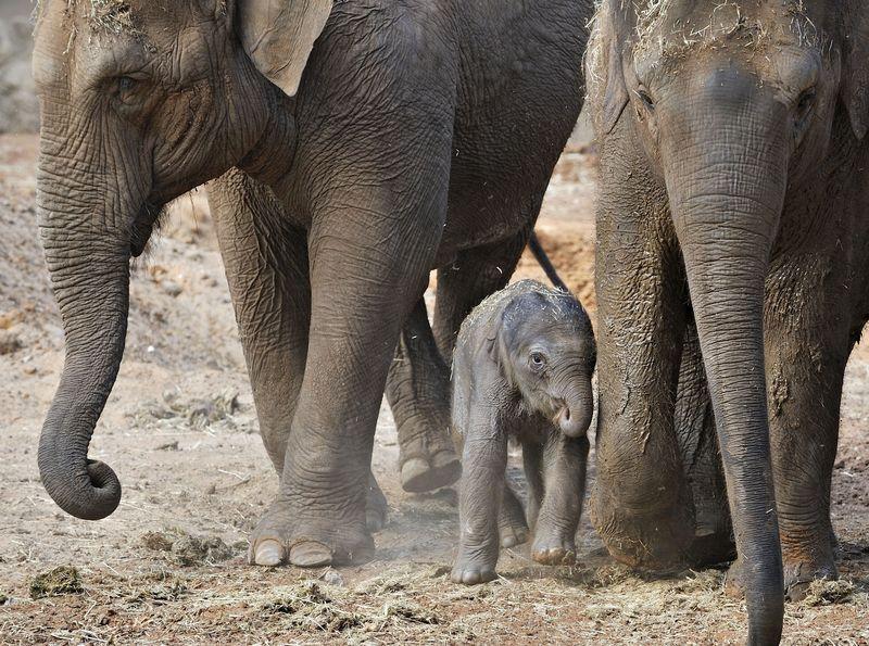 8 elephant