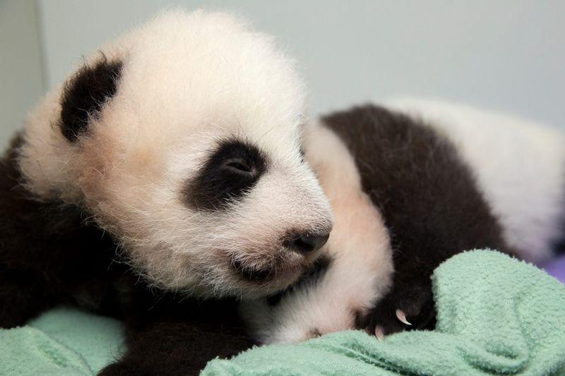 6 panda