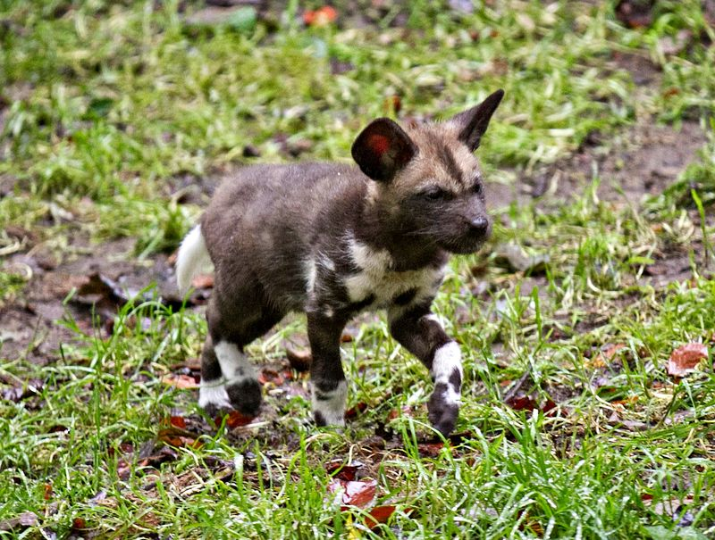 1 hunting dog