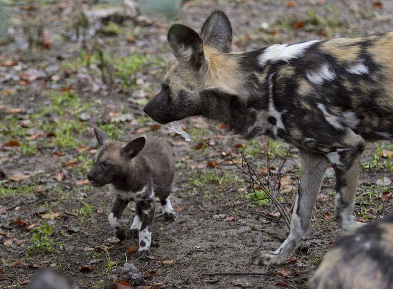 3 hunting dog