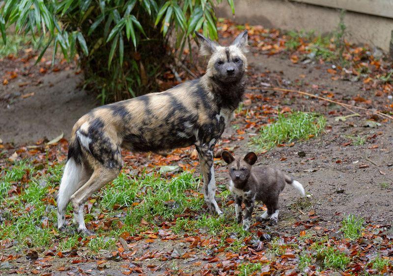 2 hunting dog