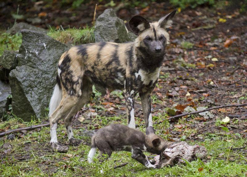 4 hunting dog