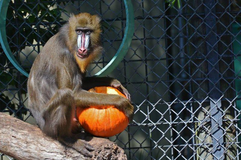 14 tampas' lowry park zoo