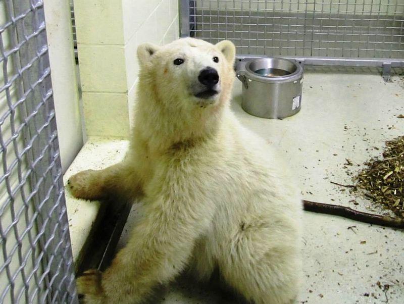 3 polar bear
