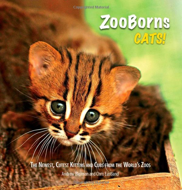 Rusty-spotted Cats: Not Your Average Kitties
