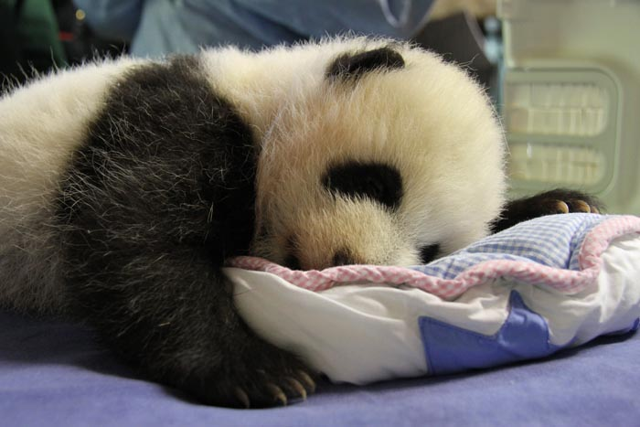 3-Esta-es-mi-postura-durmiendo