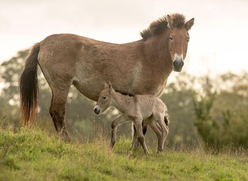 1 horse