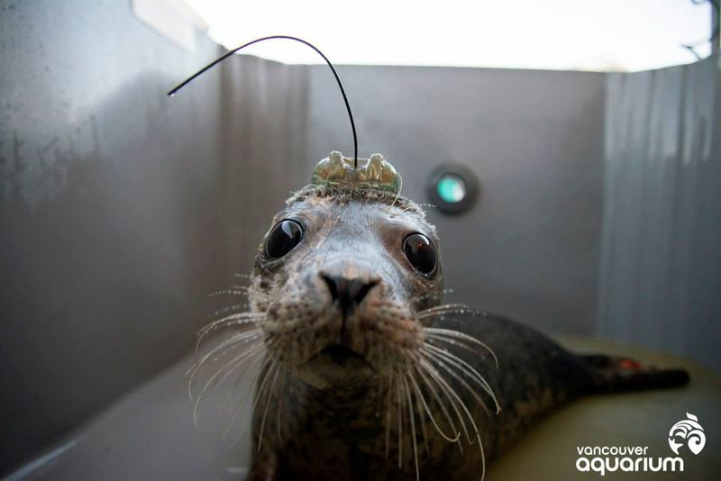 1 seal