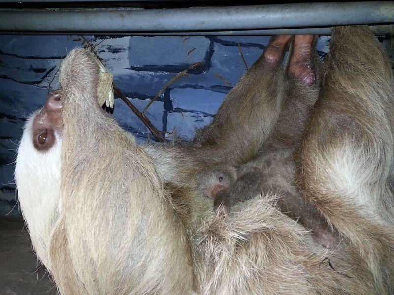 5 sloth