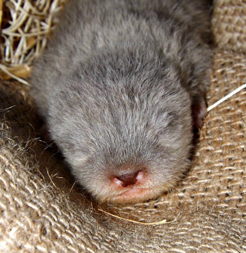 Otter pups 007
