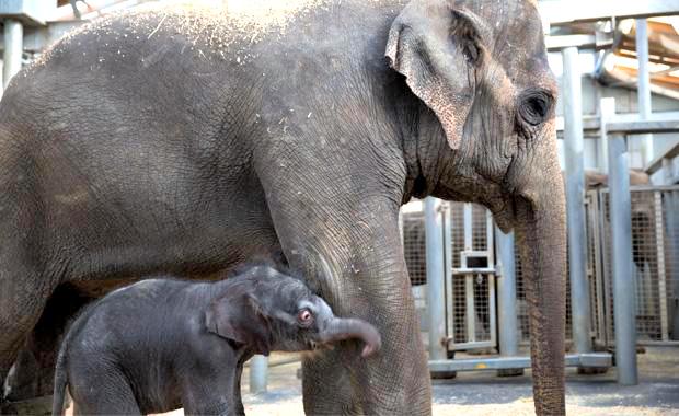4 elephant